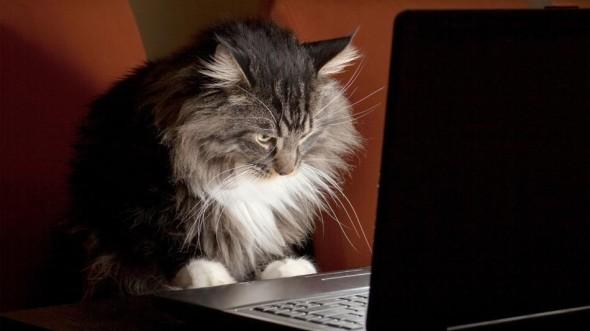 cat-search