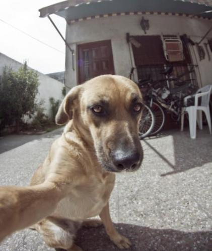 ANIMALS-dog-takes-a-selfie-out-front