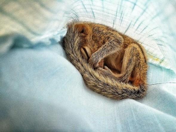 Baby Palm Squirrel Rescued By Wildlife Filmmaker 6