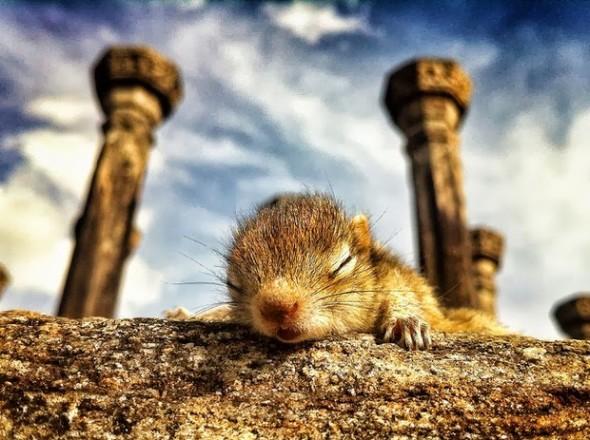 Baby Palm Squirrel Rescued By Wildlife Filmmaker 8