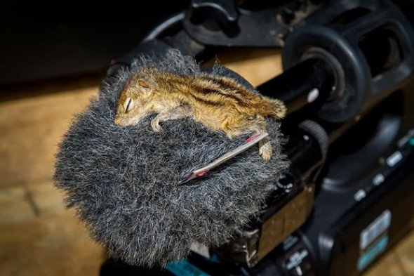 cute baby squirrel