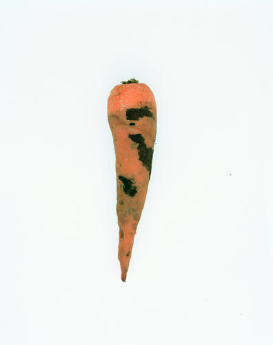 3021638-slide-56-defected-carrots-final-edit-07final-scale