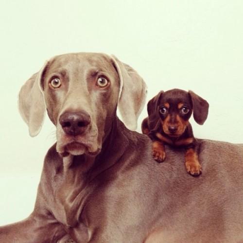 感情好到不行的大狗與小小狗11-600x600