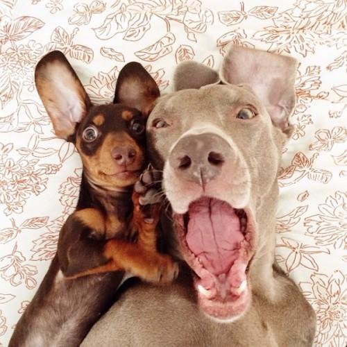 感情好到不行的大狗與小小狗2-600x600