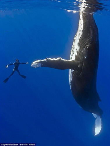 diver-whale-high-five-perfect-timing
