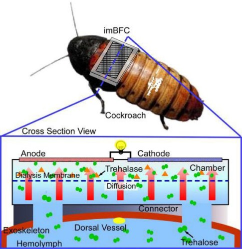 cockroachpower