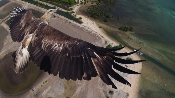 1st-place-dronestagram-eagle