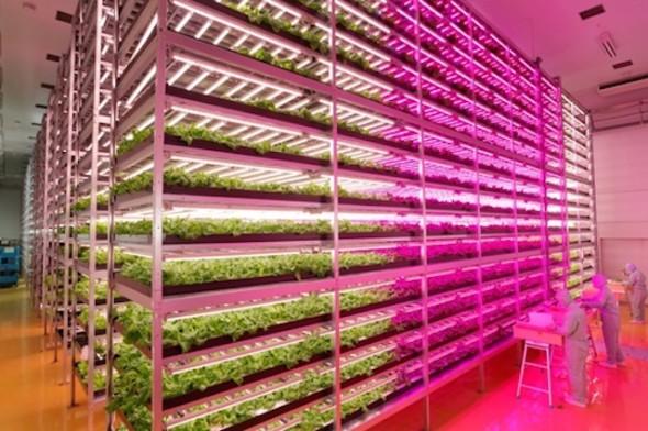 GE-LED-lights-indoor-farm.jpg.662x0_q100_crop-scale