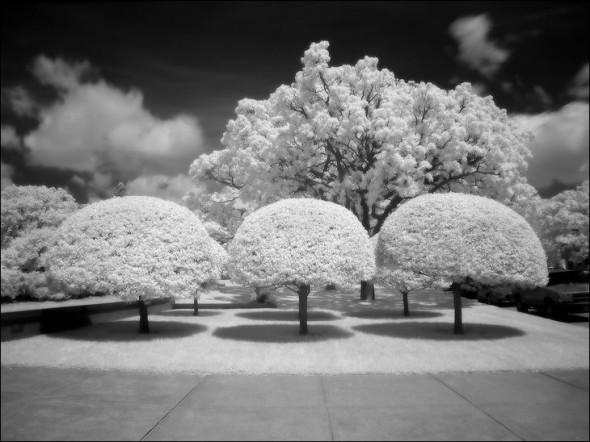 38infrared_photos03