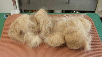 adaymag-aki-inomata-swaps-hair-dog-b