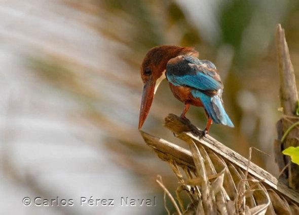 wildlife-photography-carlos-perez-naval-3