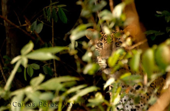 wildlife-photography-carlos-perez-naval-4