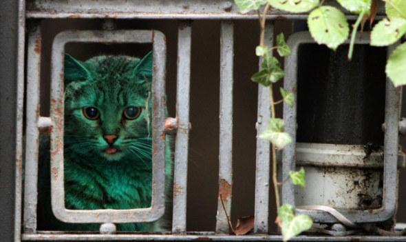 綠色貓咪2