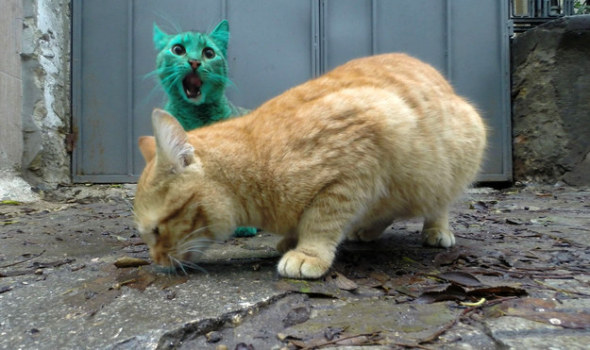 綠色貓咪6