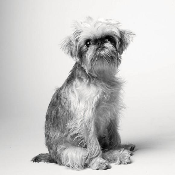 Dog-Years_Briscoe_1year