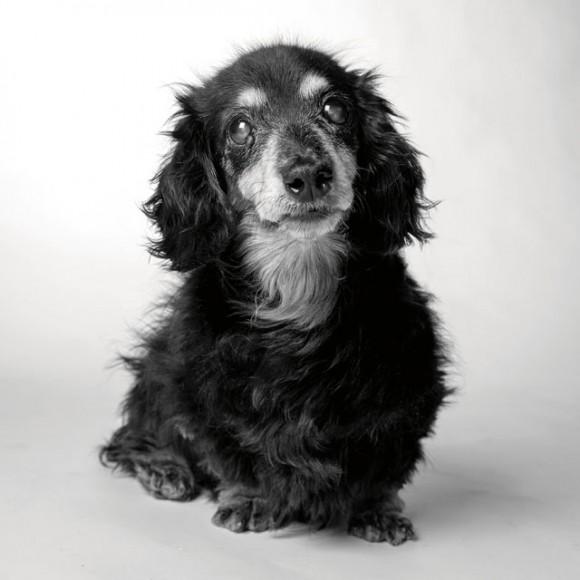 Dog-Years_Lily_15years