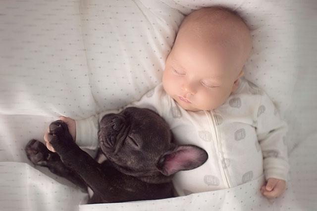 babyandbulldog3