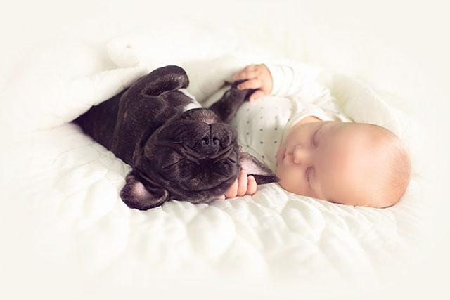 babyandbulldog5