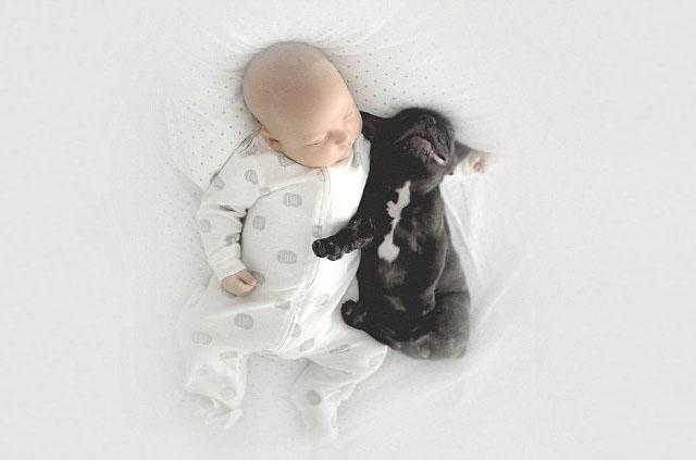 babyandbulldog7