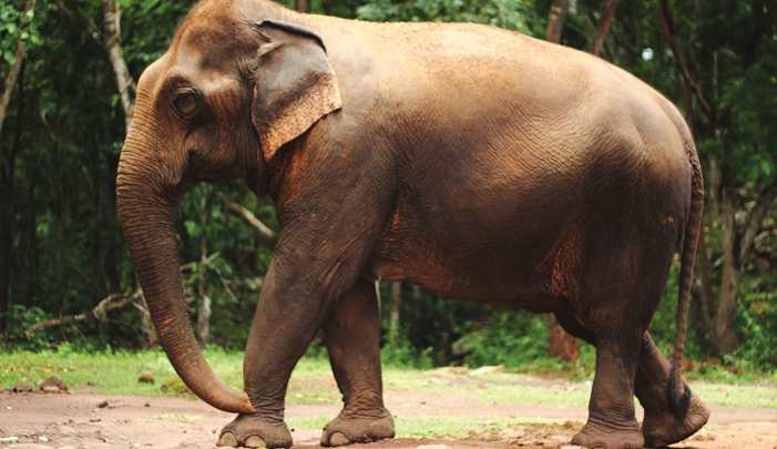 drones-elephants-conservation-wildlife-poaching