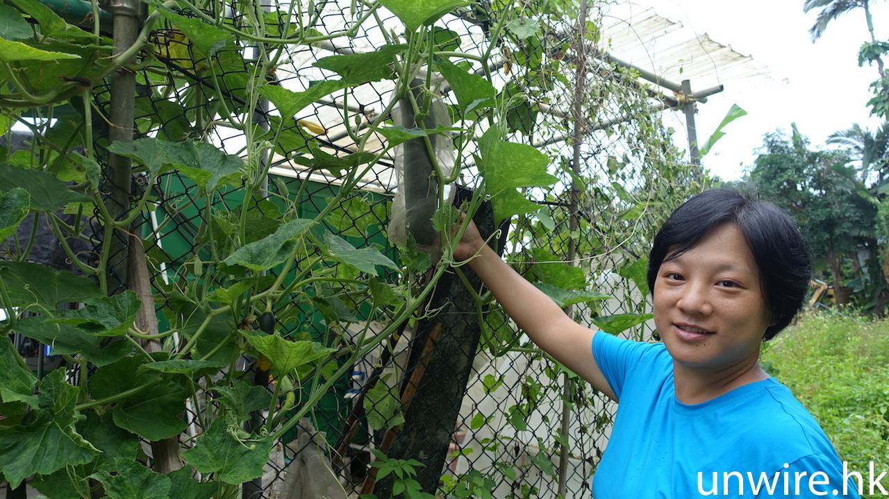 活用貨櫃造農場 解決土地問題 養魚種菜 OK -MoVertical Farm 專訪 - 香港 unwire.hk