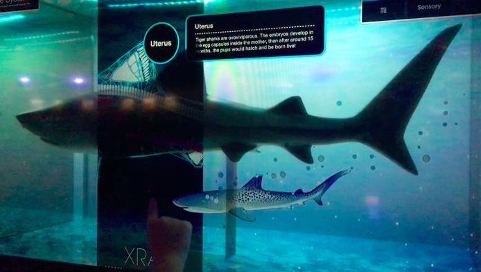 op-shark