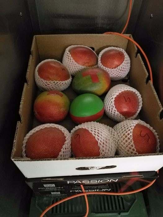 新式溫度感應器 水果運送儲存更新鮮