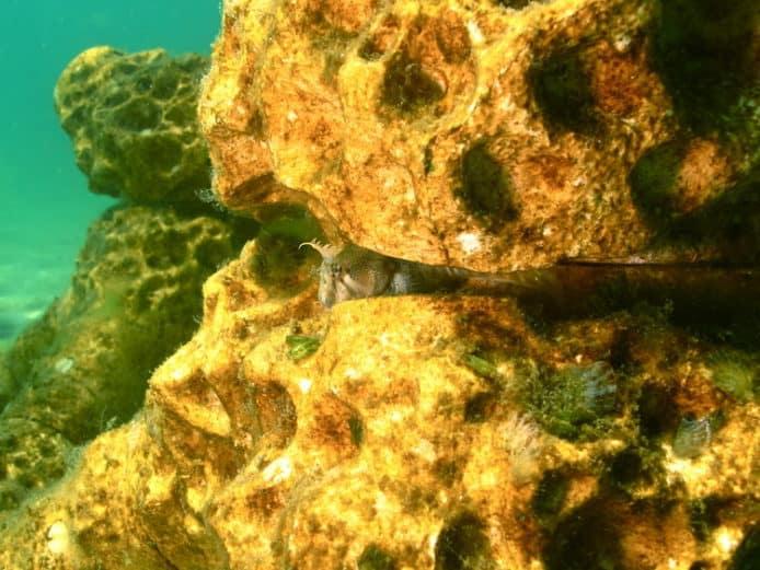 3D 打印人造珊瑚礁 冀恢复海洋生态
